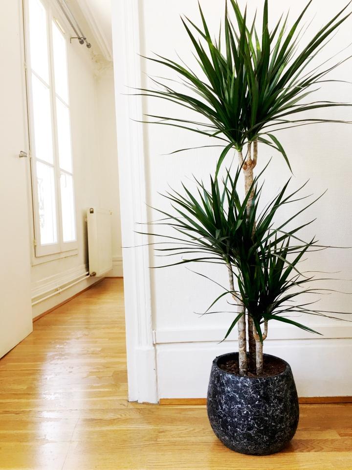 ParisianApartmentDecor_houseplant