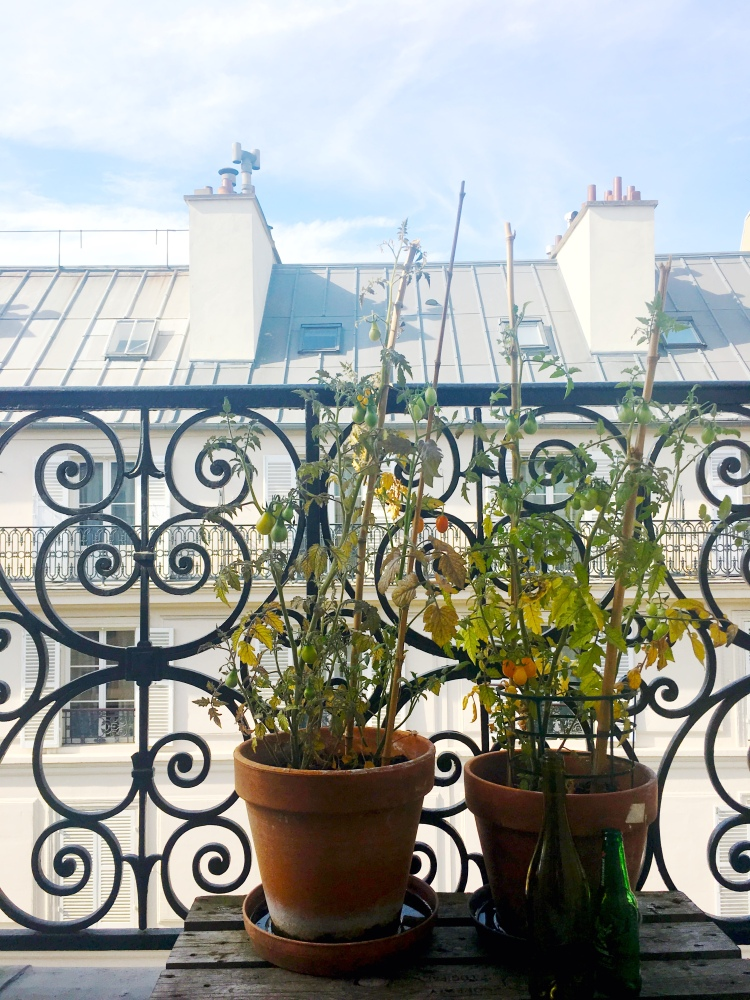 HowToDecorateyourParisianApartment_tomato plants