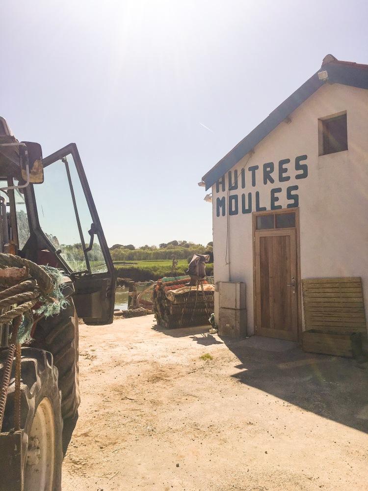 magasin des huitres île d'Oléron France