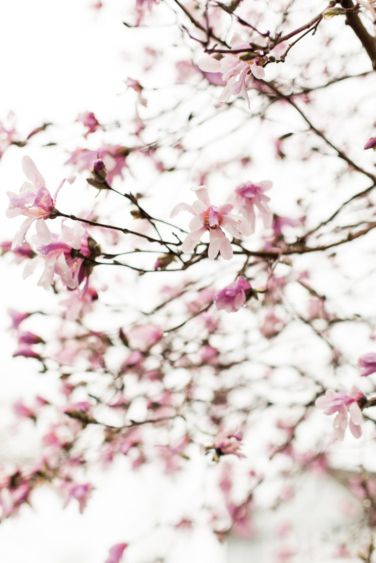 Spring photography by Kristina Staal Photography